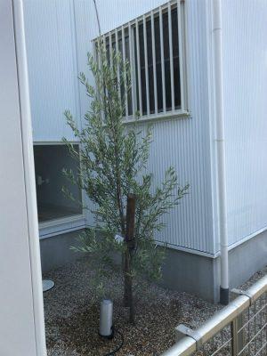岡崎市・豊田市・幸田町でエクステリア・外構設計施工、庭のリフォーム工事をするサンホームズが説明する庭木の水やり