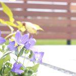 色とりどりの花が、お家とコンクリートの白色を彩ります。